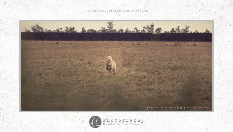 AL Photography Production Team, new Zealand